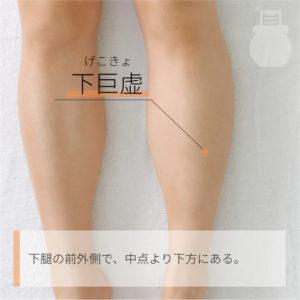 下巨虚(げこきょ)|足の陽明胃経|ST39 Xiajuxu
