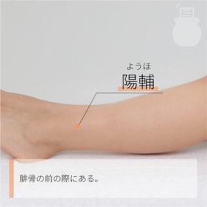 陽輔(ようほ)|足の少陽胆経|GB38 Yangfu