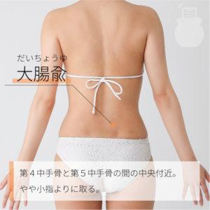 大腸兪(だいちょうゆ)|足の太陽膀胱経|BL25 Dachangshu