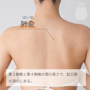 肺兪(はいゆ)|足の太陽膀胱経|BL13 Feishu